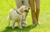 Cão Cidadão: Cães que não fazem xixi em casa, só na rua